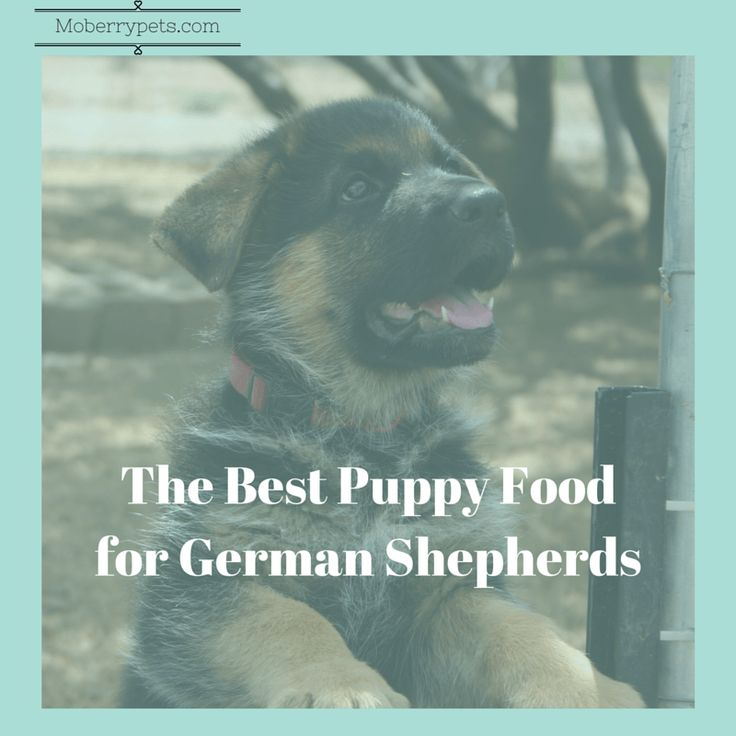 |Moberrypets.com| The Best Puppy Food for German Shepherds