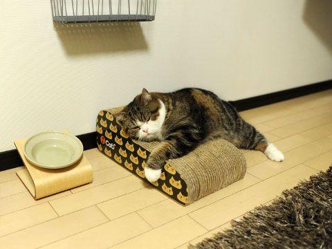 Maru the Cat taking a nap