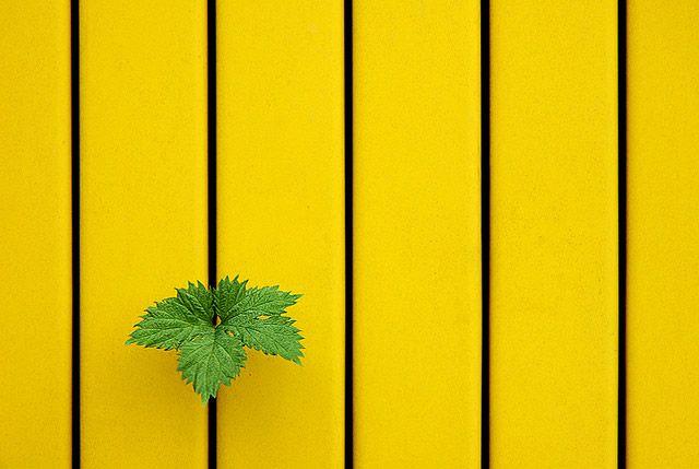 Yellow, Green, Yellow