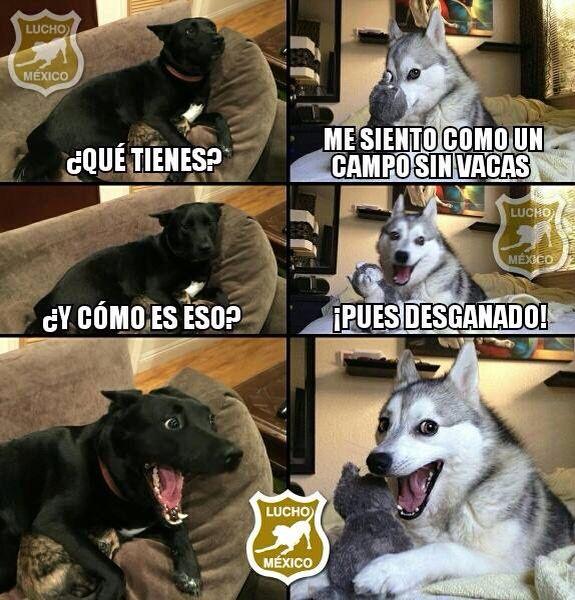 Lucho meme perro chiste