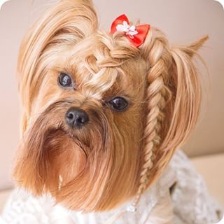 This sweet-faced dog with a side braid. | 22 Of The Fiercest Dog Hairstyles On The Planet