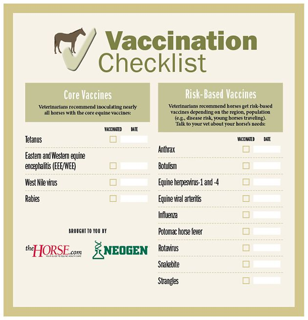 Vaccinations: Horse, Veterinarians And Horse Care