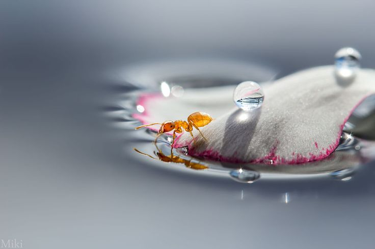 Ant in Wonderland by Miki Asai on 500px