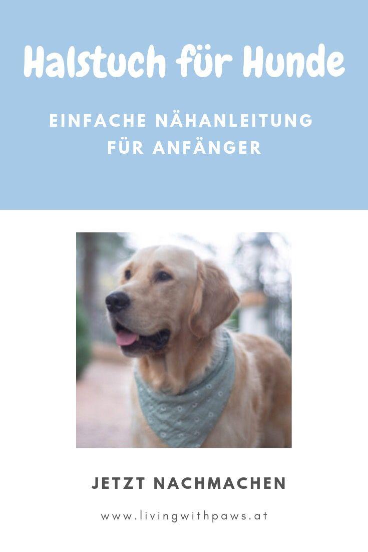 DIY Halstuch für Hunde   Nähanleitung für Anfänger   living with paws – Hundehaltung