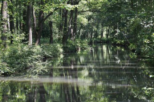 4) Spreewald  Urige Wälder und ein endloses Labyrinth aus Kanälen und Flussläufen: Ich habe den Spreewald erst kürzlich entdeckt und war hingerissen. Am besten erkundet ihr ihn natürlich auf dem Wasser. Entweder in einem der großen Kähne, allerdings muss man hier mit einer hohen Rentner-Dichte rechnen. Lustiger ist es mit einem kleinen Kanu. Über die Spreescouts in Burg könnt ihr tolle geführte Kanutouren buchen, entweder für ein paar Stunden oder auch mehrere Tage.