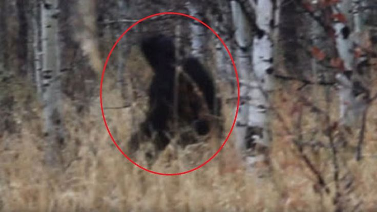 New Bigfoot Sighting Alpine Loop Slowed Down And Zoomed In Enhanced | The Fortean Slip