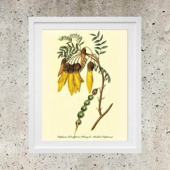 SALE Wall Art  Poster Download  Vintage Botanic by DigitalBanana Winged - Podded Sophora