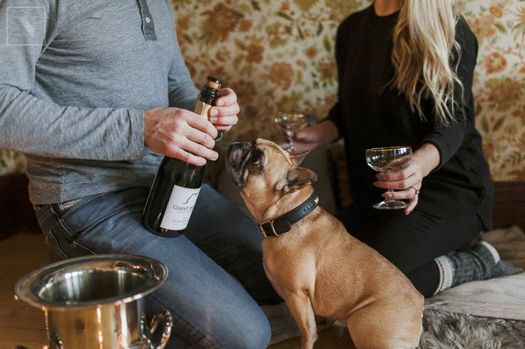 french bulldog Miss Waffles opening champagne