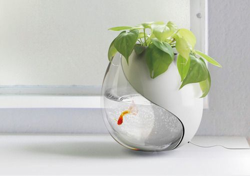 lprocket:      One Pot, Two Lives  Another great pot idea based on a simple love affair. The fishy eats and 'wastes out' its lunch, the plant feeds on its nutrients. The plant eats some water and filters it down so it is clean for the fishy. Happy families. Check out more on the Yanko Design website.