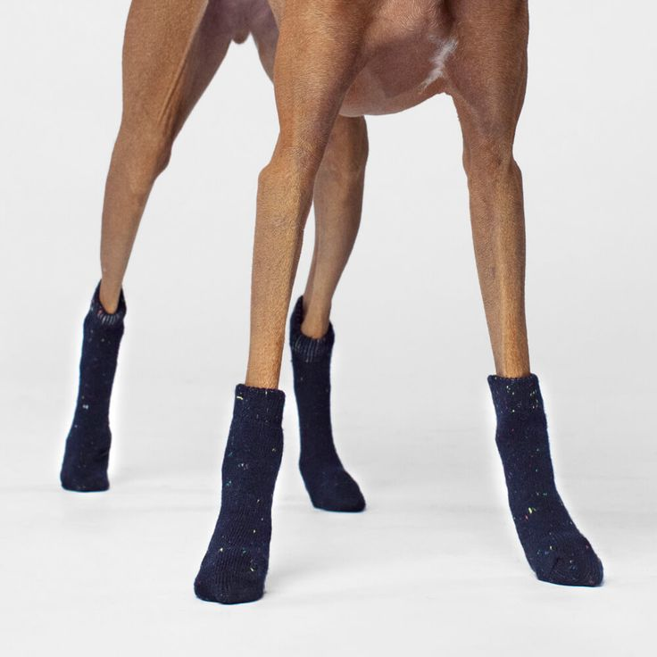 Canada Pooch Dog Socks in Navy | The stylish cable-knit socks that keep all four paws toasty & trendy