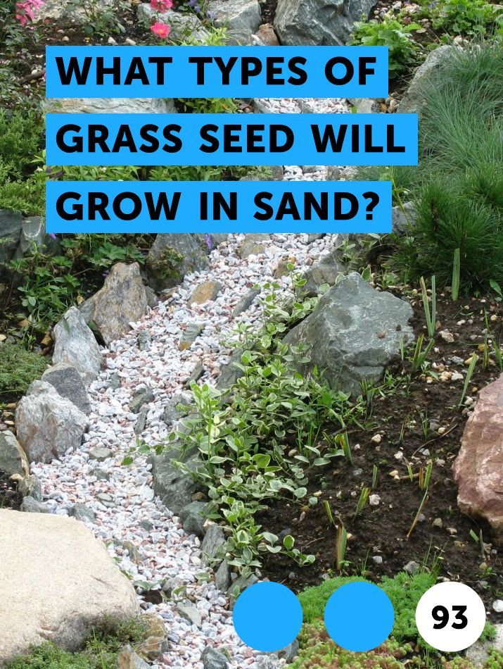 Learn What Types Of Grass Seed Will Grow In Sand How To Guides Tips And Tricks Grass Seed Types Knockout Roses Growing Grass