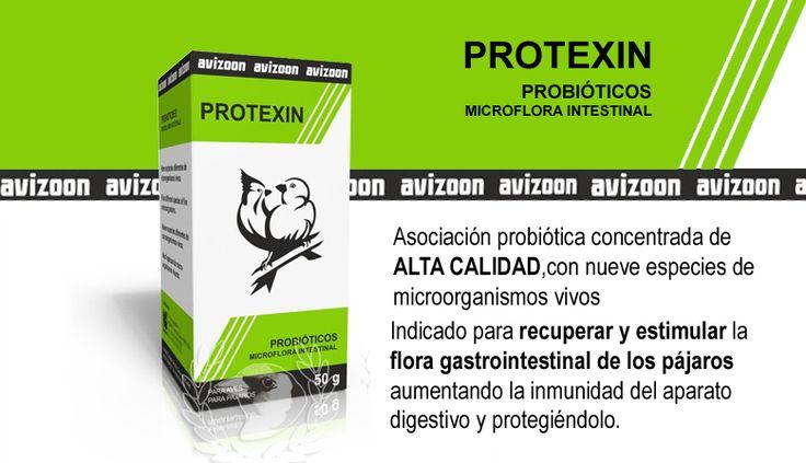 PROTEXIN (probióticos de ALTA CALIDAD) Avizoon Asociación probiótica de alta calidad, concentrada con nueve especies de microorganismos vivos. Indicado para recuperar y estimular la flora gastrointestinal de los pájaros, aumentando la inmunidad del aparato digestivo y protegiéndolo.  Los probióticos desempeñan un papel muy importante en el día a día de la salud y del bienestar de los animales en general, sobre todo debido al tipo de alimentación a que estos están sujetos y a las condiciones