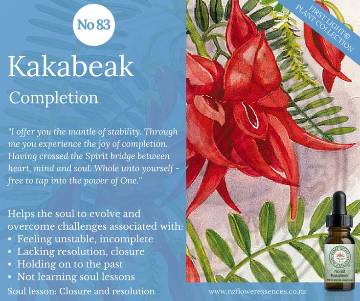 Kakabeak - Completion - assists final transition, synthesis and integration of a situation or life lesson. Use to get a sense of closure regarding an important task, relationship or life phase. Enhances holistic living and living in an enlightened manner. Use for stressful situations, to feel balanced in a changing situation or environment, while travelling or changing location. Assists with inter dimensional stability helping you to adapt to the new high frequencies pouring into the planet.