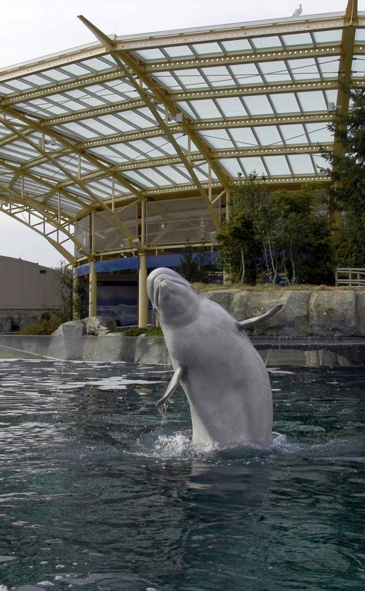 Mystic Aquarium | Travel | Vacation Ideas | Road Trip | Places to Visit | Mystic | CT | Aquarium | Cinema | Zoo | Tourist Attraction | Children's Attraction