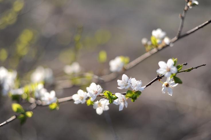 Danish flower tree