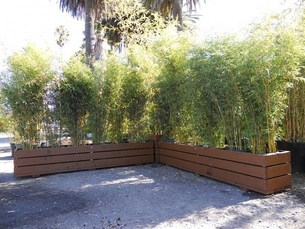 17 Best Ideas About Bamboo Planter On Pinterest Bamboo