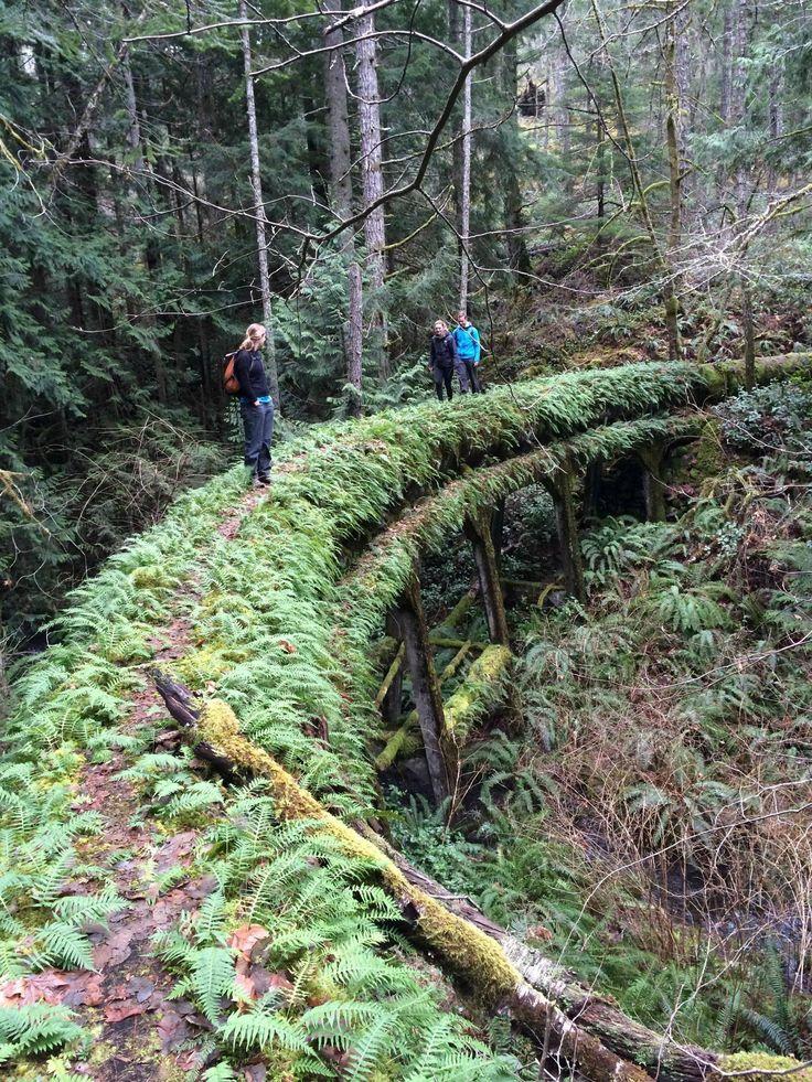 Sooke Flow Line. Built 1912, abandoned 1970-2009 in Sooke, BC, Canada. (1652x2203) [OC] - Imgur