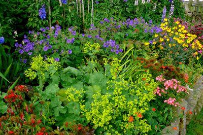 Voorbeelden van bloemen voor de cottagetuin:     Stokrozen  Oude rozen  Margrieten  Goudsbloemen  Korenbloemen  Duizendschoon  Campanula's  Papavers  Lupinen  Salvia's...