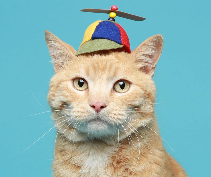 Hats For Cats Godaddy