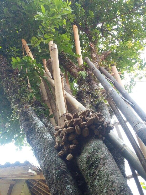 A tree nam nam. The original pieces of West Java