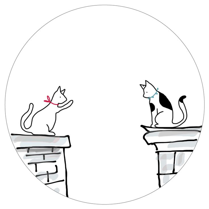 Studio 360 macskák átölel valentin valentin nap