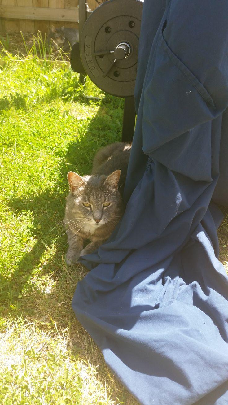 Spirit Cat Pawshake Papamoa Cats, Animals, New zealand