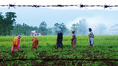 A group of women working on a field in the early hours, Nepal, 2010