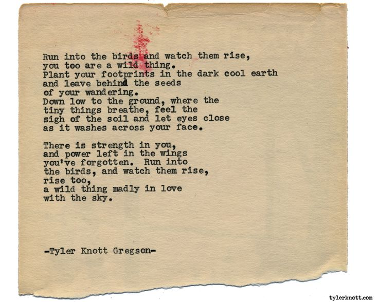 Typewriter Series #1618 by Tyler Knott Gregson Chasers of the Light & All The Words Are Yours are Out Now!