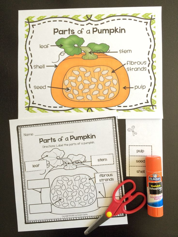 Fresh Ideas - Pumpkin Investigation Unit All About Pumpkins {Life Cycle