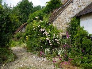 French cottage with foxglove and ivy