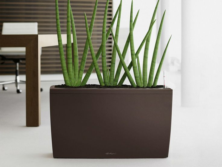 26 best Modern Indoor Planters images on Pinterest | Indoor plant ...