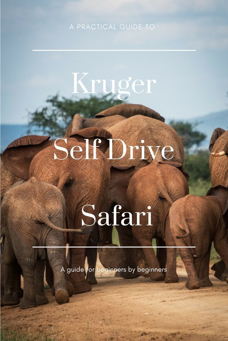 Planning a Kruger self drive safari? Find out what to take, how to plan and most of all, what to expect. A practical guide to Kruger self drive safari by beginners for beginners.