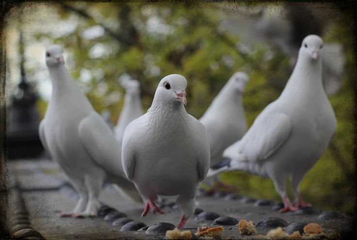 Mr White, Mr White, Mr White, Mr White & Mr White