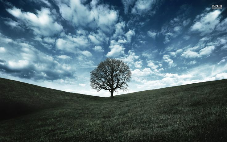 Image result for lonely tree