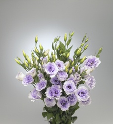 lavender lisianthus: all year  $