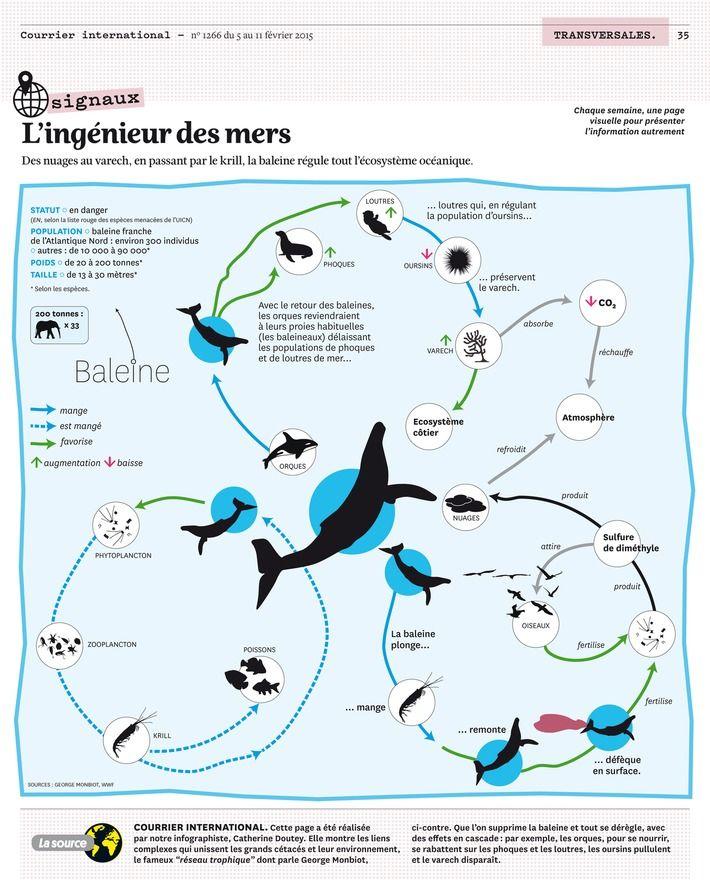 migration sur carte baleine à bosse - Recherche Google
