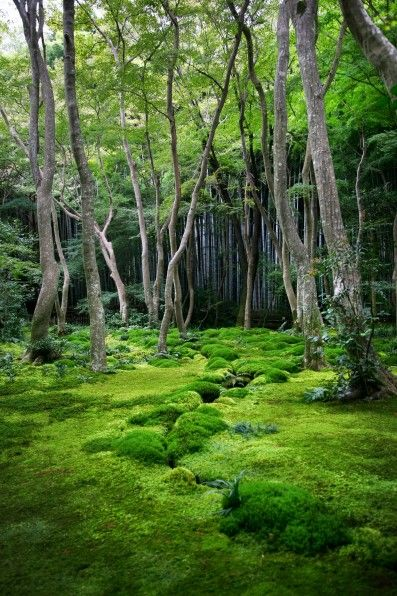 Japanischer Garten mit sorgfältig gepflegtem Moos.