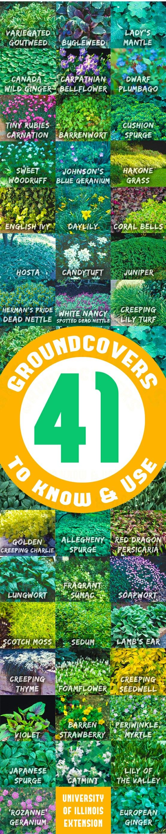 41 Groundcovers to Know & Use: Groundcover plants, when properly taken care of, provide dense soil cover, retard weed growth, and prevent soil erosion. Groundcovers range in height from an inch to four feet. They can be woody or herbaceous; clumping or running; evergreen or deciduous. There is a broad array of colors and textures to choose from.