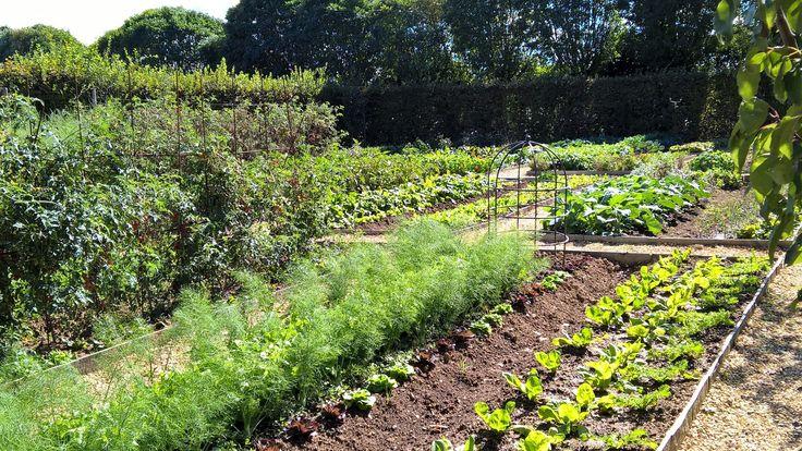 Beyond organic... farm to plate freshness http://www.borgosantopietro.com/en/life-borgo-santo-pietro/borgo-farm/