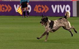 Globo Esporte SP - Cachorro que invadiu a Arena Corinthians é encontrado | globo.tv