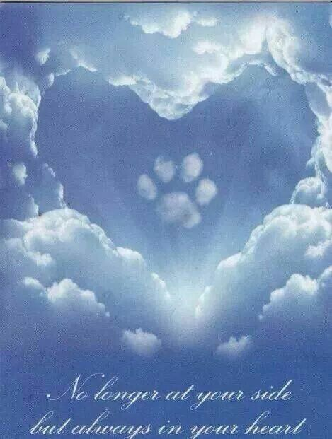 Image result for grieving and loss images of pet