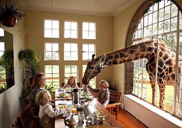 Giraffe Manor Lodge in Kenya