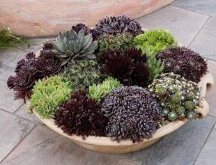 Pi di 25 fantastiche idee su vasi fioriera su pinterest - Grossi fiori da giardino ...