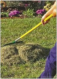 Dethatching Rakes – Thatching Rakes  What You Should Know | Aerate Lawn