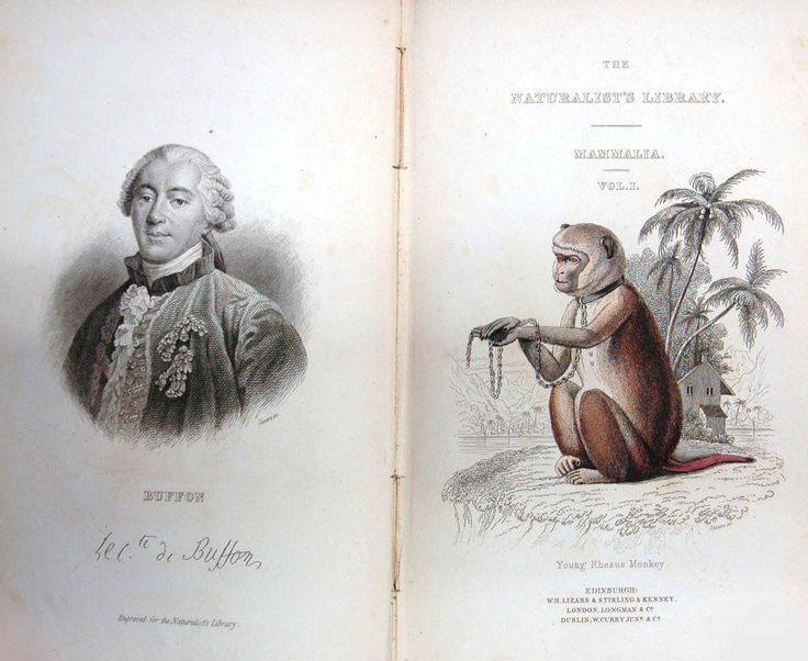 Sir William Jardine, 'The Natural History of Monkeys.' Vol. I. The Naturalist's Library. Edinburgh: W.H. Lizars, and Stirling and Kenney, [and others], 1833. DeB Sb 1833 N M1