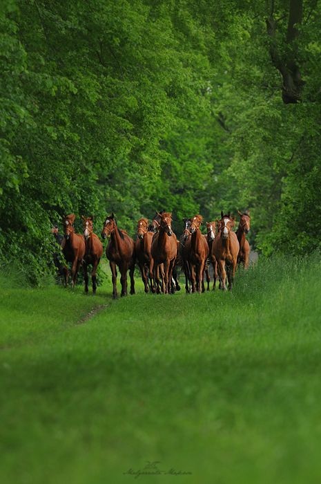 Herding Beauty!