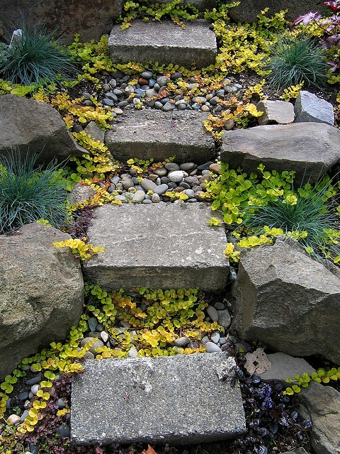 Landscape Stone Ground Cover : Images about ground cover ideas on pinterest