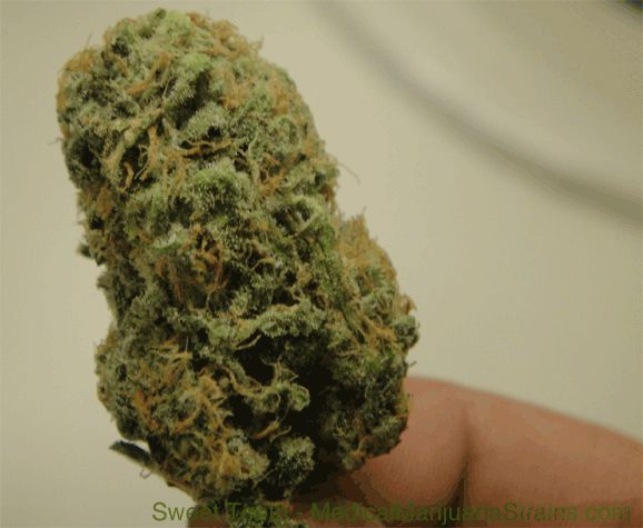 sweet tooth strain - http://potterest.com/sweet-tooth-strain-4