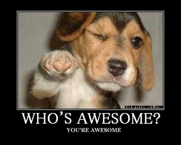 You Re Awesome Funny Memes : Who s awesome you re cats pinterest
