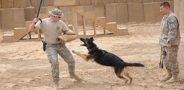 MILITARY WORKING DOG HANDLER 31K